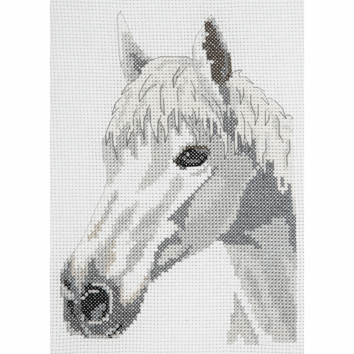 Picture of Counted Cross Stitch Kit: Starter: White Beauty: Horse