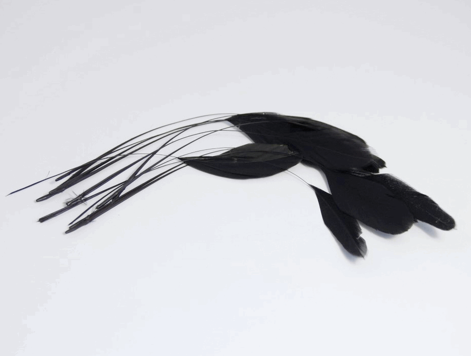 Picture of Feathers: Diamond Cut: Pack of 12: Black