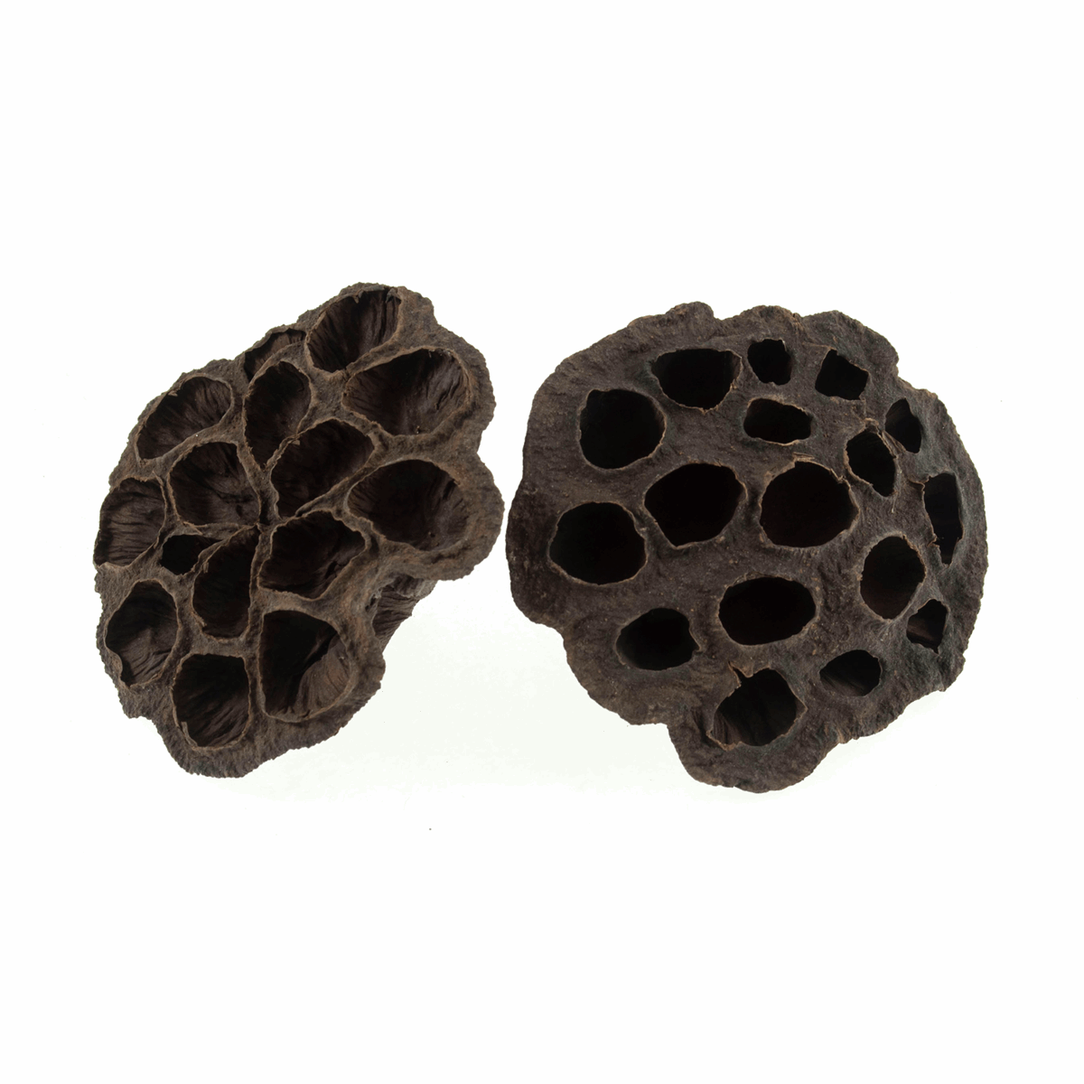 Picture of Dried Lotus Heads: 2 Pieces: 8-10cm