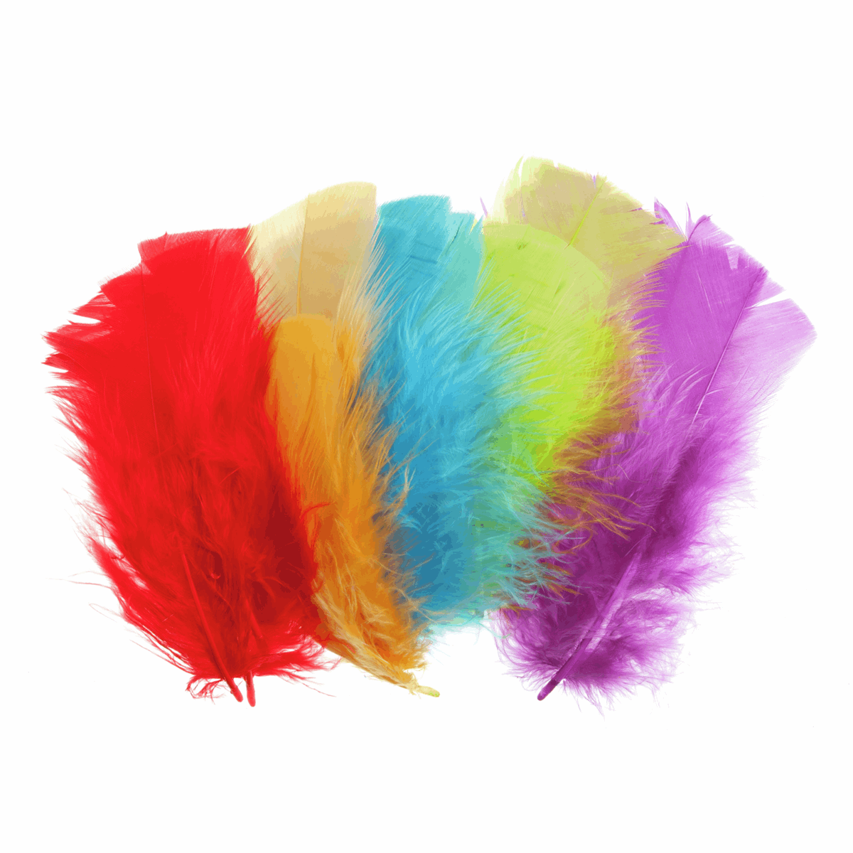 Picture of Feathers: Assorted Small: 100