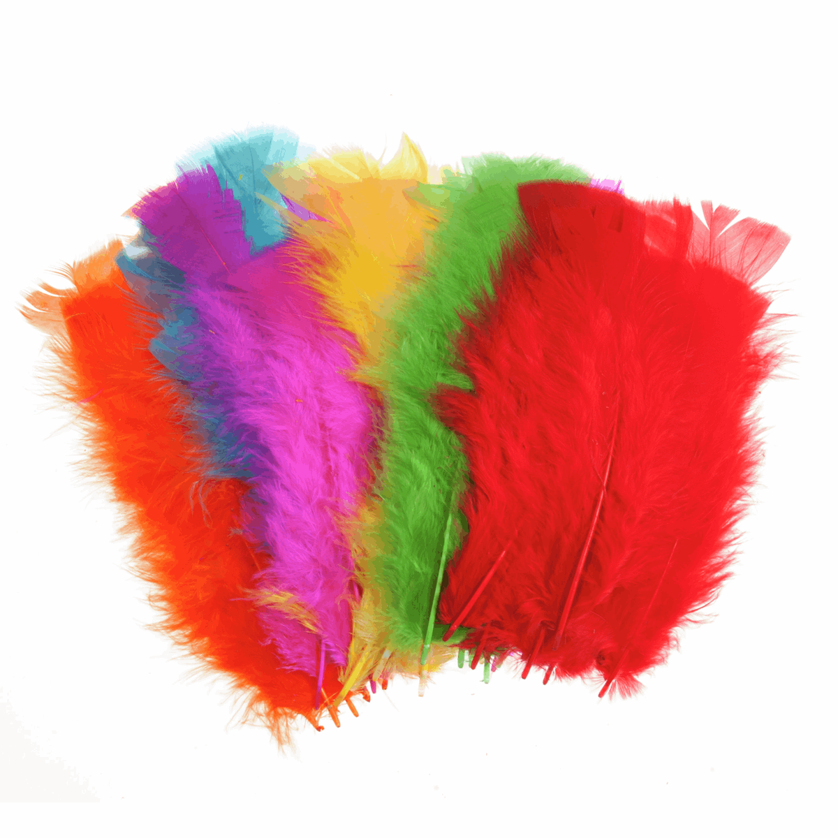 Picture of Feathers: Assorted Large: 50